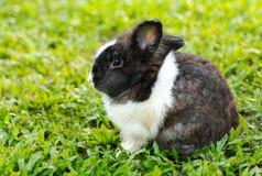 Кролик зайчика сидит тихо на лужайке. Стоковая Фотография RF