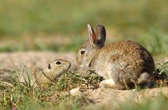 Кролик и земная белка Стоковые Изображения