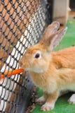 Кролик и морковь Стоковые Фото