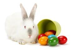 Кролик и яичка пасхи Стоковая Фотография