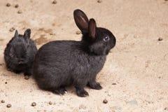 Кролик матери с ее младенцем Стоковые Изображения