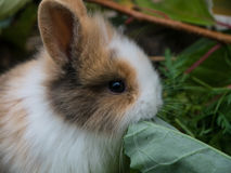 кролик младенца милый Стоковое фото RF