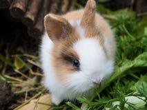 кролик младенца милый Стоковая Фотография