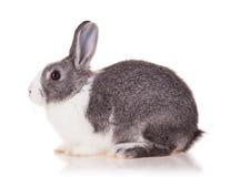 Кролик на белой предпосылке стоковые изображения