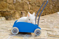 Кролик на вагонетке Стоковое Фото