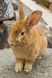 Кролик на каменных утесах Стоковое Фото