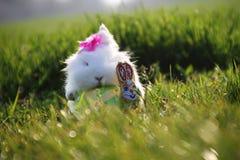 Кролик пасхи белый на зеленой траве Стоковые Изображения
