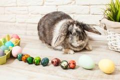 Кролик пасхи в доме Стоковые Изображения RF
