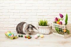 Кролик пасхи в доме Стоковая Фотография RF