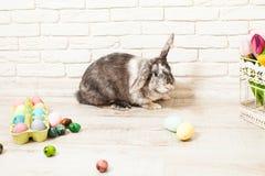 Кролик пасхи в доме Стоковое фото RF