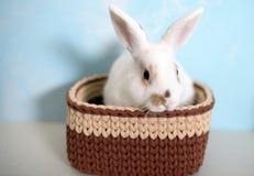 Кролик пасхи в связанной корзине Стоковые Фотографии RF