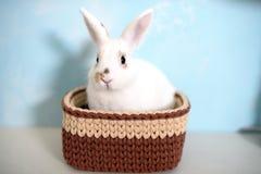 Кролик пасхи в связанной корзине Стоковая Фотография RF