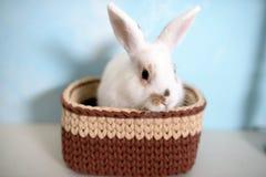 Кролик пасхи в связанной корзине Стоковое Фото