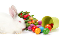 Кролик пасхи и красочные яичка Стоковое Изображение