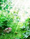 Кролик пасхи и праздничные яичка на Glade Стоковая Фотография