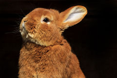 Кролик пасхи смотрит вверх Стоковое Изображение