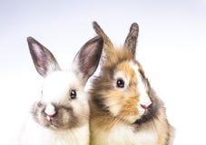 кролик пасхи Стоковое Фото