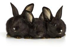 кролик предпосылки тихий сидит белизна Стоковое Изображение RF
