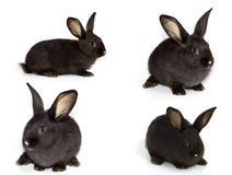 кролик предпосылки тихий сидит белизна Стоковые Изображения