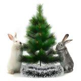Кролик рождества Стоковые Фото