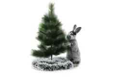 Кролик рождества Стоковая Фотография