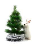 Кролик рождества Стоковая Фотография RF