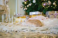 Кролик сидит под рождественской елкой Стоковые Изображения RF