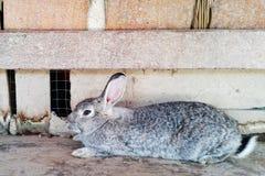 Кролик сидя близко к стене Стоковые Изображения