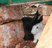 Кролик смотря через окно Стоковые Изображения RF