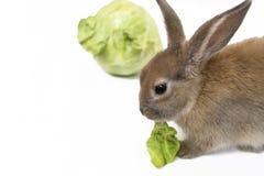 Кролик с капустой Стоковая Фотография