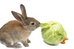 Кролик с морковами и капустой Стоковое фото RF