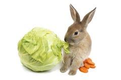 Кролик с морковами и капустой Стоковые Фотографии RF