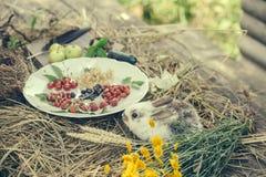 Кролик с одичалыми ягодами и зелеными яблоками Стоковые Фотографии RF
