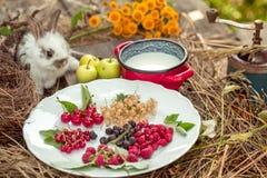 Кролик с одичалыми ягодами доит и зеленеет яблока Стоковые Изображения