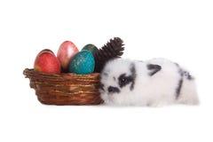 Кролик с яичками другого цвета Стоковая Фотография RF