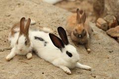 Кролик Стоковое Изображение