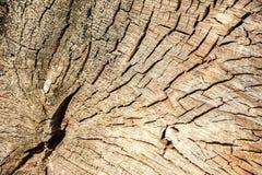 Круги дерева Стоковые Фотографии RF