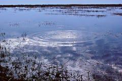Круги на воде, пульсации воды Стоковые Изображения