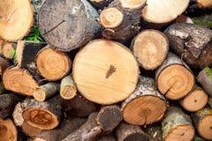 Круглая древесина вносит предпосылку в журнал текстуры конца-вверх при различные диаметры размера сосен, который хранят в большой Стоковые Фотографии RF