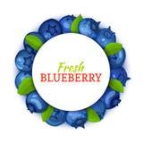 Круглая покрашенная рамка составленная очень вкусного плодоовощ голубики Иллюстрация карточки вектора Голубая черника свежая и со Стоковая Фотография