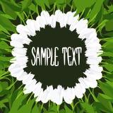 Круглая рамка белых тюльпанов покрашенных вручную на черной предпосылке конструируйте ваше Стоковые Фото
