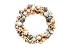 Круглая рамка круга от различных seashells изолированных на белой предпосылке с космосом для текста Текстура seashell наяды стоковые изображения