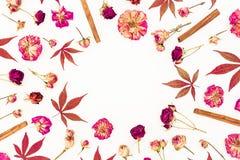 Круглая рамка сделанная из листьев красного цвета осени, высушенных роз и циннамона на белой предпосылке Плоское положение, взгля Стоковая Фотография RF
