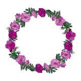 Круглая рамка с одичалыми розами Лето цветет поздравительная открытка или предпосылка свадьбы иллюстратор иллюстрации руки чертеж Стоковые Фотографии RF