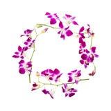 Круглая рамка цветка орхидеи изолированная на белой предпосылке с путем клиппирования Бутоны цветка Purpler, от взгляд сверху Стоковое Изображение RF