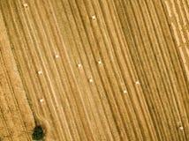 Круглые связки сена на стерне Стоковая Фотография