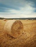 Круглые bales сторновки Стоковые Фото