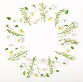 Круглый венок рамки сделанный из изолированных цветков и листьев весны на белой предпосылке Плоское положение Стоковые Фотографии RF