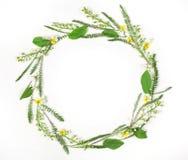 Круглый венок рамки сделанный из изолированных цветков и листьев весны на белой предпосылке Плоское положение Стоковые Изображения RF
