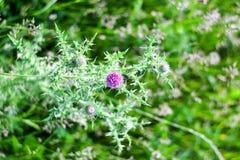 Круглый голубой цветок с зеленым цветом запачкал предпосылку Стоковые Изображения